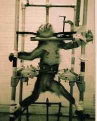 i-vivisection-02